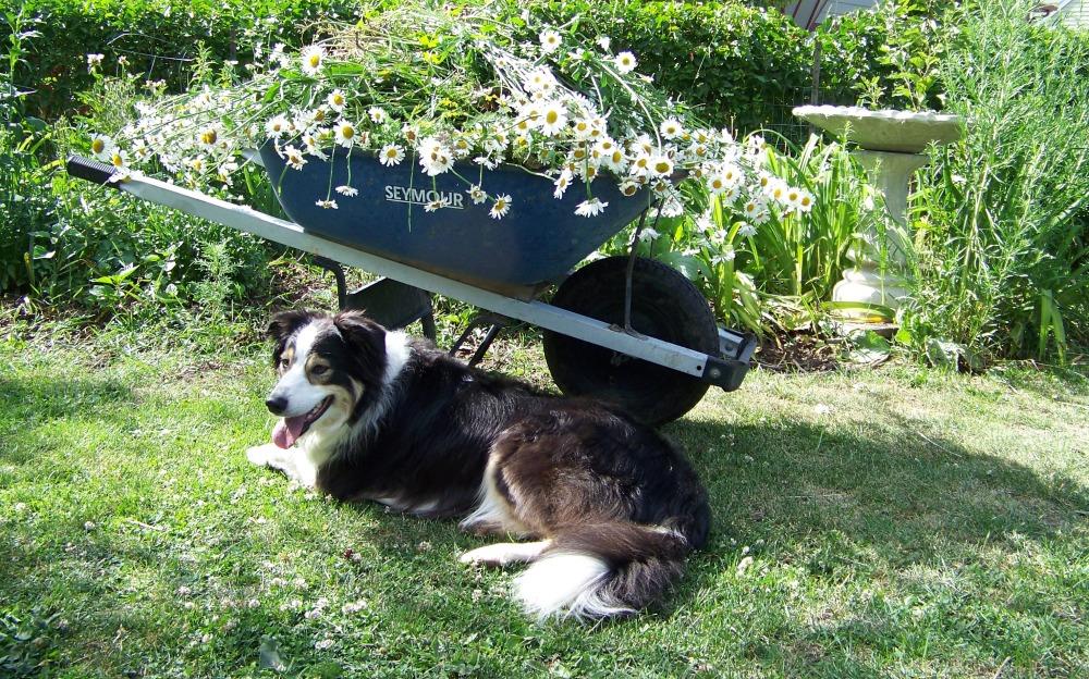 gardening with $eeker