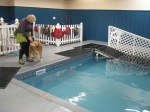 Alaska K9 Aquatics. Awesome facility