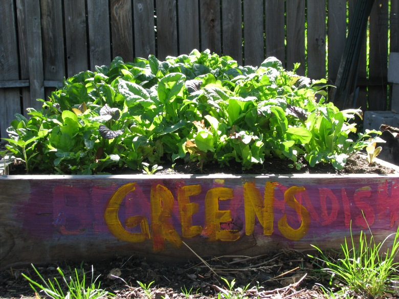 this is my favorite bed this year. A mixture of  ever flavored lettuce type green there is!