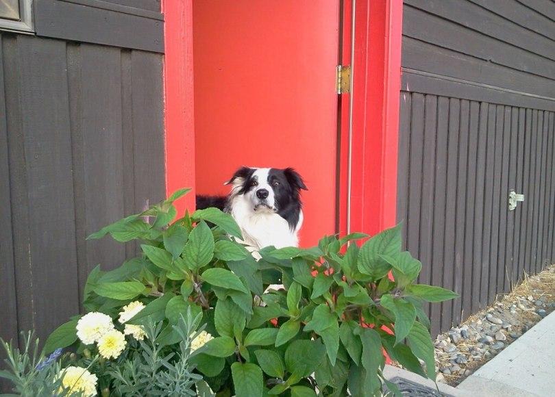 Lowe's no longer allows dogs – Nancy Tanner