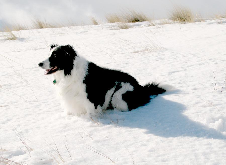 snowstory