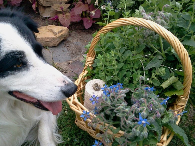 story with basket of herbs