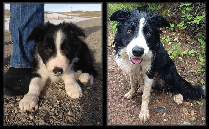 Mosey at 7 weeks & 7 months. One handsome boy!