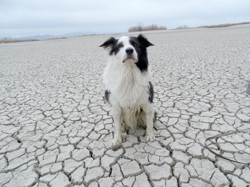The Definitive Dog Poop Guide Nancy Tanner