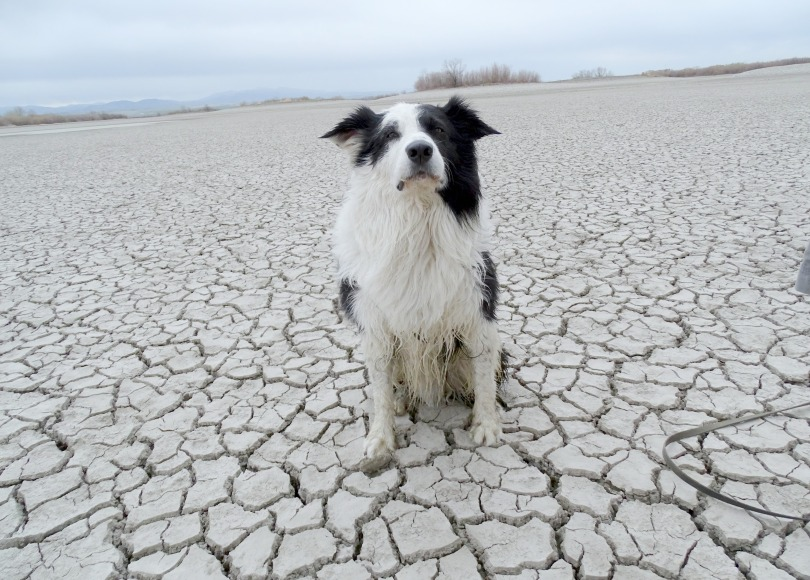 The Definitive Dog Poop Guide – Nancy Tanner