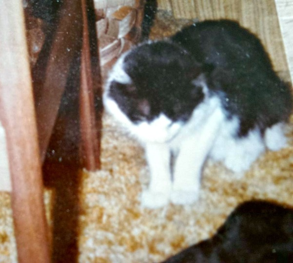 Zapo, my favorite cat before I left for college
